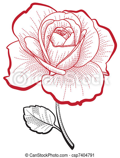 Hand drawing rose - csp7404791