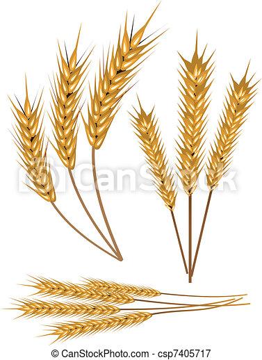 Wheat - csp7405717