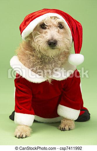 Small Dog In Santa Costume - csp7411992