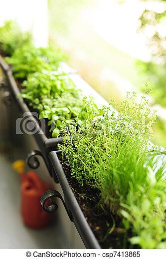 Balcony herb garden - csp7413865