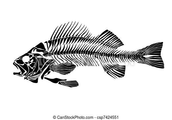Fish Skeleton Drawing Fish Skeleton Csp7424551