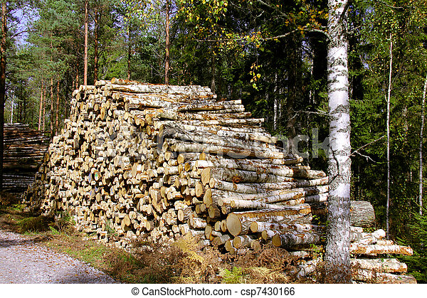 Pile of Birch Logs in Forest - csp7430166