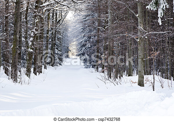 winter scenery - csp7432768