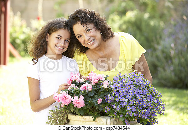 Grandmother And Granddaughter Gardening Together - csp7434544