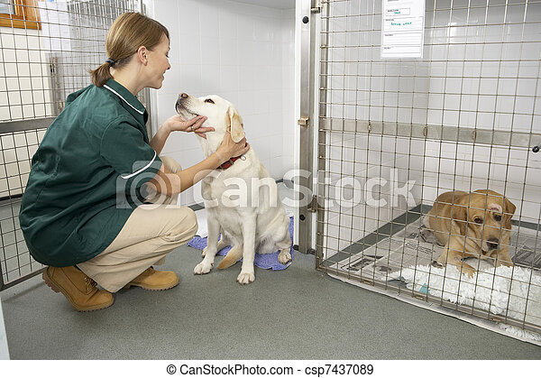 Vetinary Nurse Checking Sick Animals In Pens - csp7437089