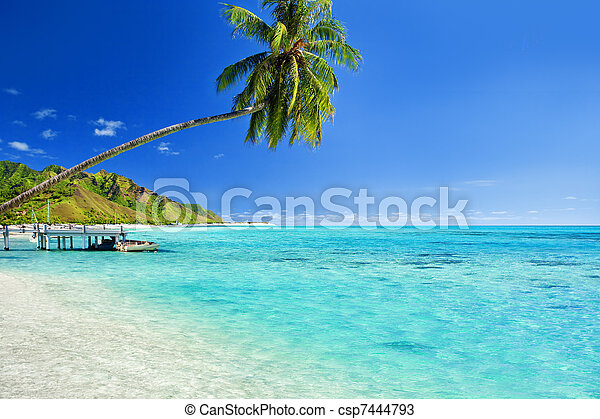 Palm tree hanging over lagoon with jetty - csp7444793