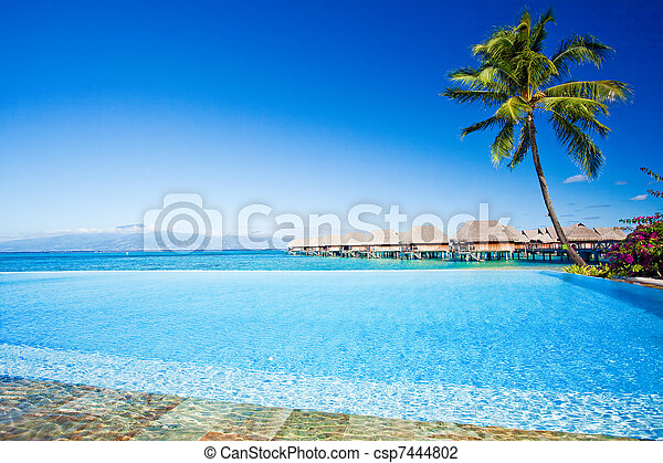 Palm tree next to swimming pool - csp7444802