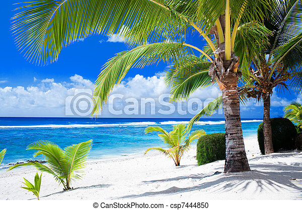 Palm trees overlooking amazing blue lagoon - csp7444850