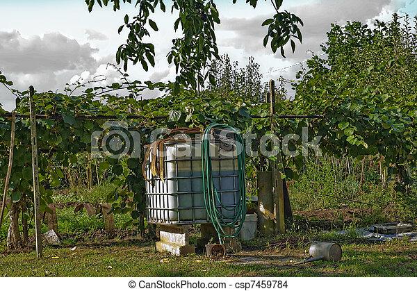 photo de kiwi plante grand r servoir de eau dans devant de csp7459784 recherchez. Black Bedroom Furniture Sets. Home Design Ideas