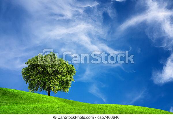 Oak tree in nature - csp7460646