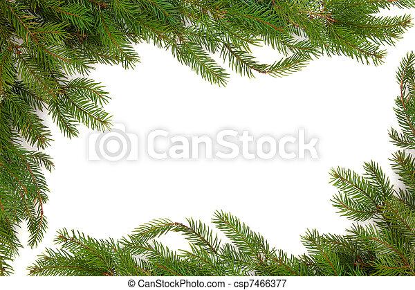 Spruce Fir Pine Border - csp7466377