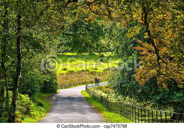 A couple walking through early Autumn woodland - csp7470798
