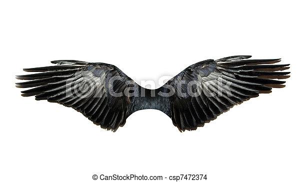 wings - csp7472374