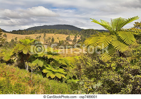 queensland landscape with tree fern and rain forest - csp7489001