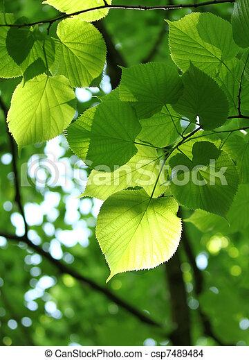 fresco, follaje, primavera - csp7489484