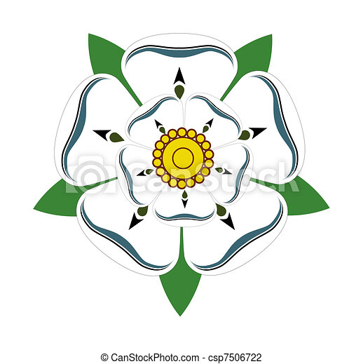 White rose of Yorkshire - csp7506722