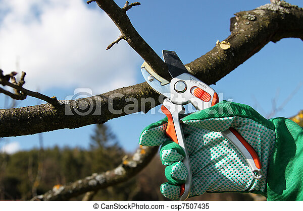 Pruning twigs and branches - csp7507435