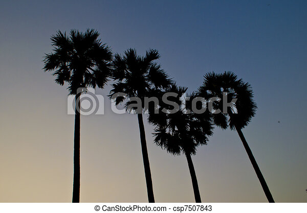 coconut trees and blue clear sky with sunset - csp7507843