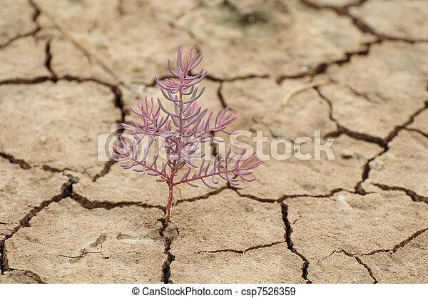 planta, crescendo, fenda, secos, chão - csp7526359