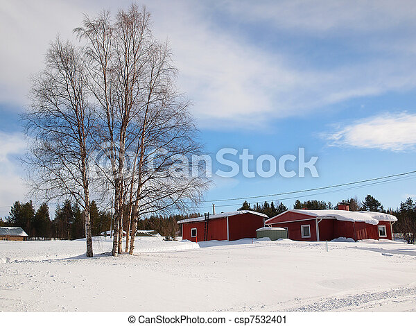 Birch trees in Lapland - csp7532401