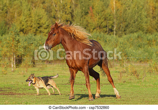 horse and dog - csp7532860