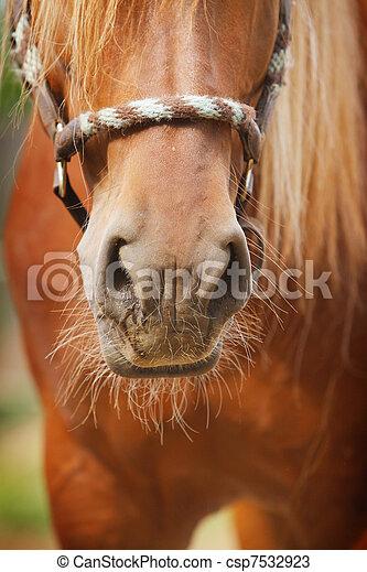 horse nose - csp7532923