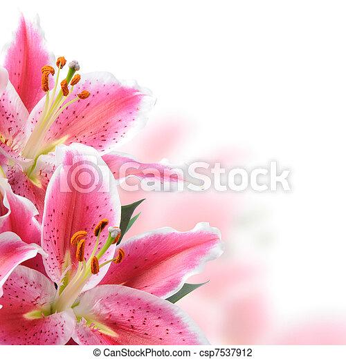 Pink lilies - csp7537912