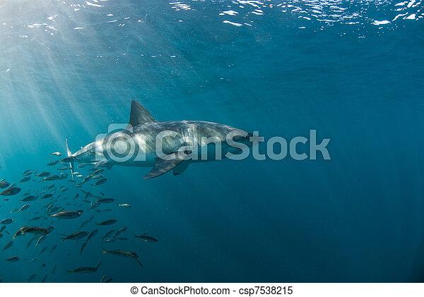 Shark escape - csp7538215