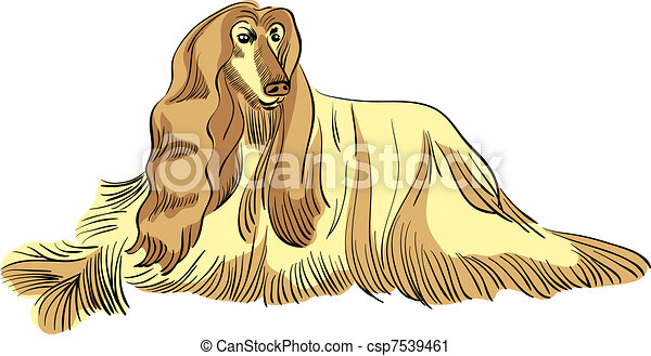 vector dog Afghan hound breed color - csp7539461