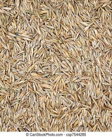capim, semente - csp7544285