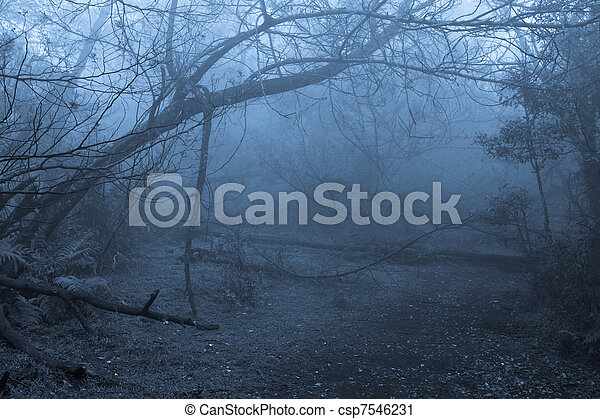 Tropical forest in fog - csp7546231