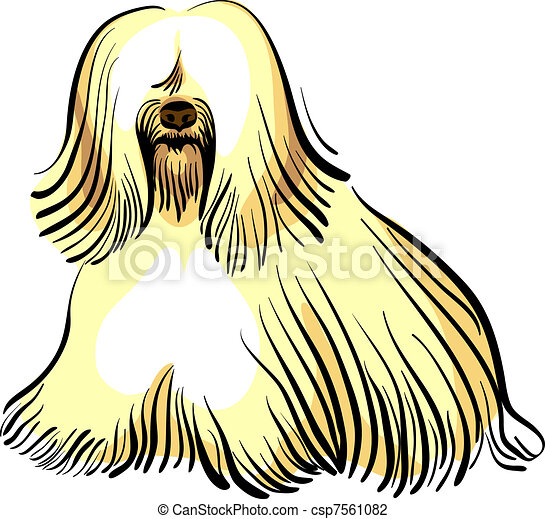 vector dog Tibetan Terrier breed - csp7561082