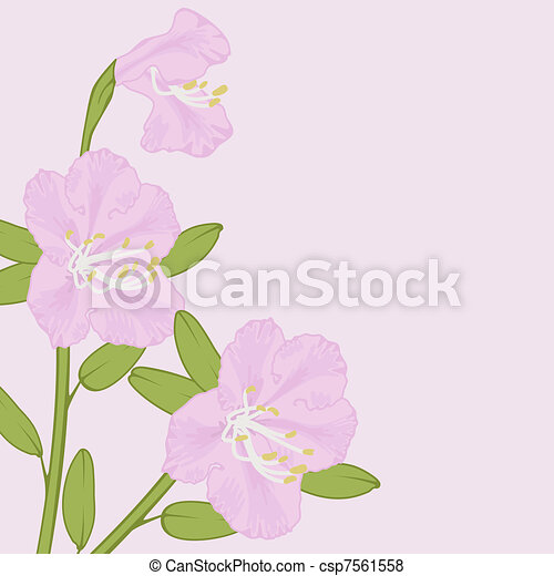 Pink Rhododendron Drawing Vector Rhododendron Vector