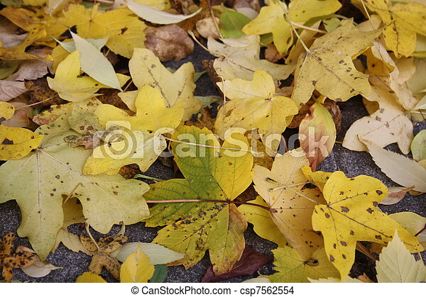 Leaves - csp7562554