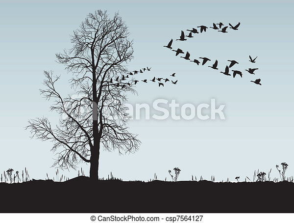 Wild Geese Drawing Chestnut And Wild Geese