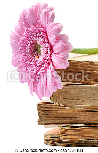 Stack of old books with pink mum flower - csp7564133