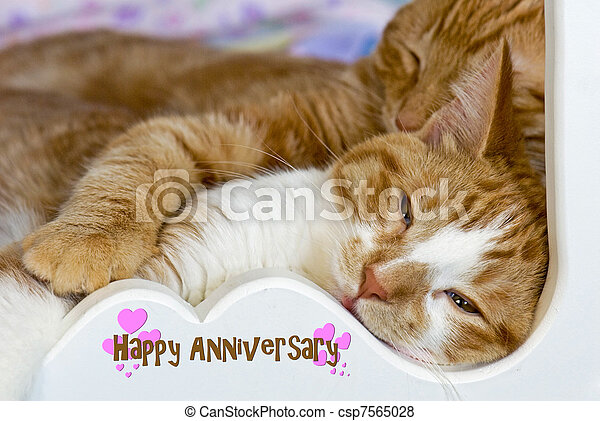 tabby cats snuggling - csp7565028