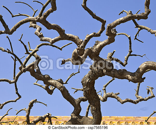 image de arbre diverge tordu the sans feuilles gnarly