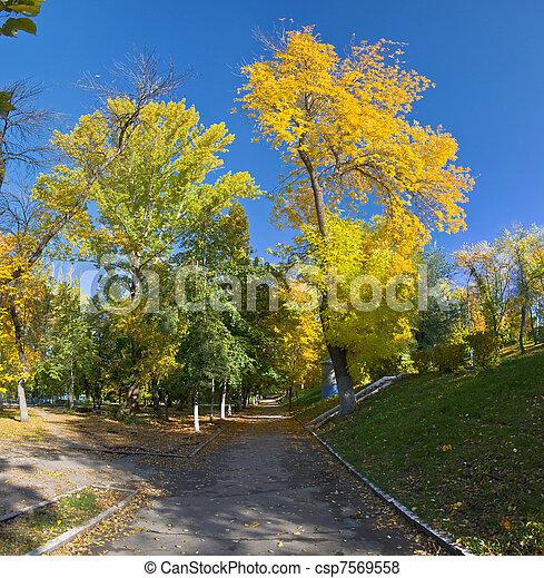 Orange and yellow trees in the park. Autumn landscape, non urban scene. - csp7569558