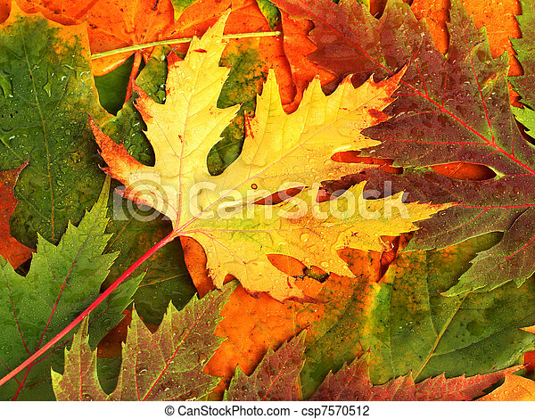 Beautiful backdrop of fallen autumn leaves for design - csp7570512