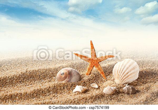 Sea shells on the sand against blue sky - csp7574199