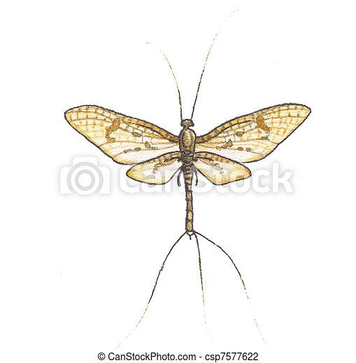 Mayflies  - csp7577622