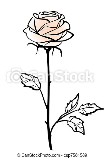 Beautiful single pink rose flower isolated on the white  background, vector illustration  - csp7581589