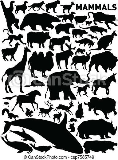 Däggdjur - csp7585749