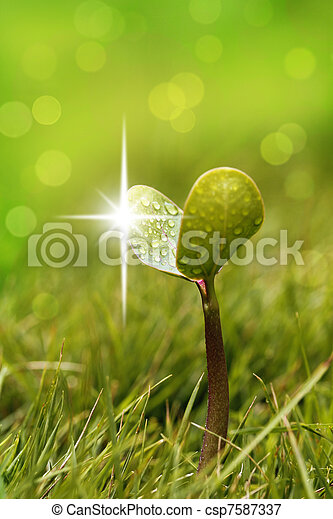 Seedling with shining droplets of water in a garden lawn - csp7587337