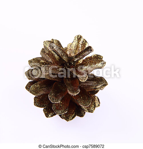 Golden conifer cone - csp7589072
