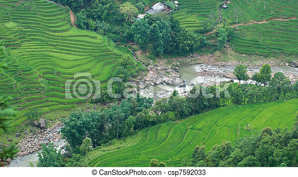 Rice terraces and river in Sapa Valley - csp7592033