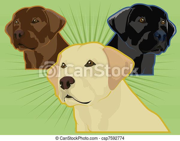 Labrador Retriever Drawings Various Labrador Retrievers