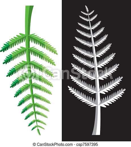 fern leaves - csp7597395