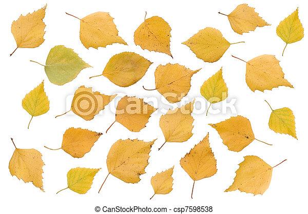 葉, 上に, 隔離された, 秋, 背景, 白 - csp7598538